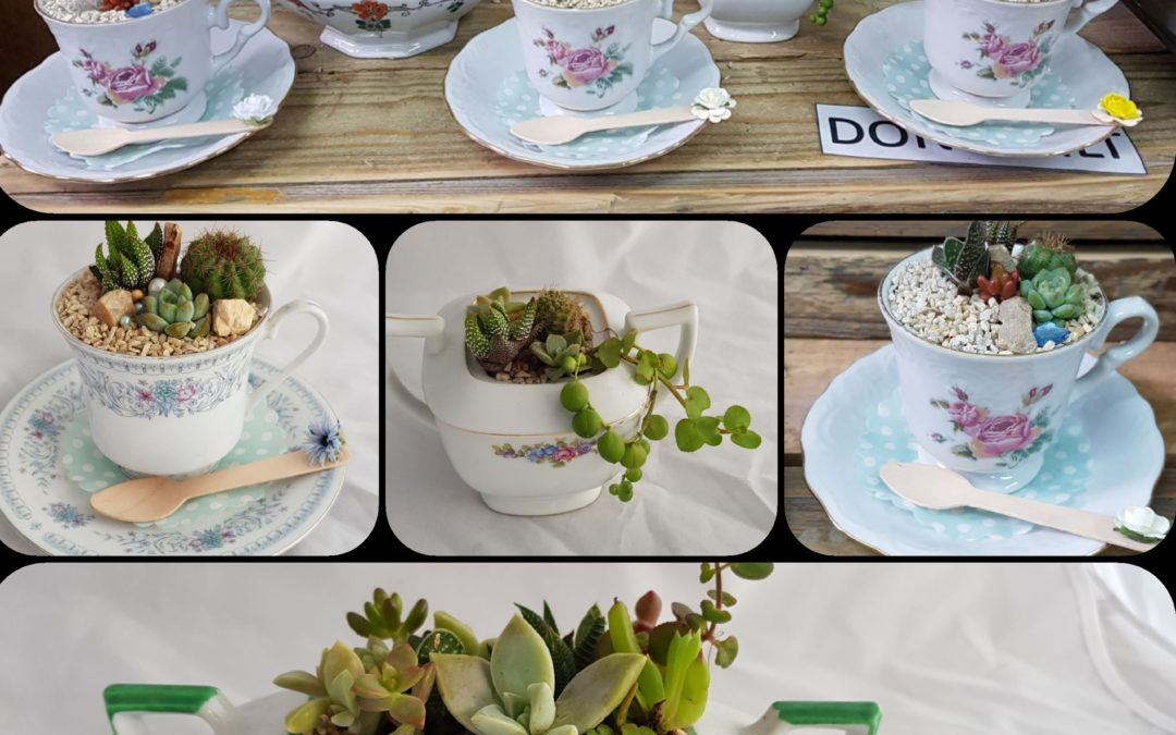 Mother's Day Succulent tea cup gifts and greeting cards