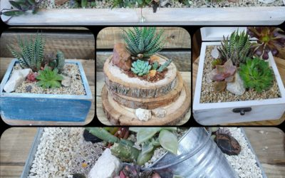 Father's Day succulents gift pots – 16th June 2019